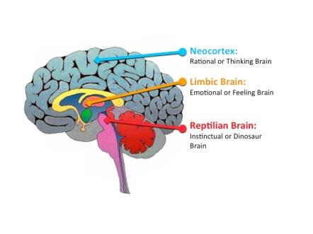 reptillian-brain