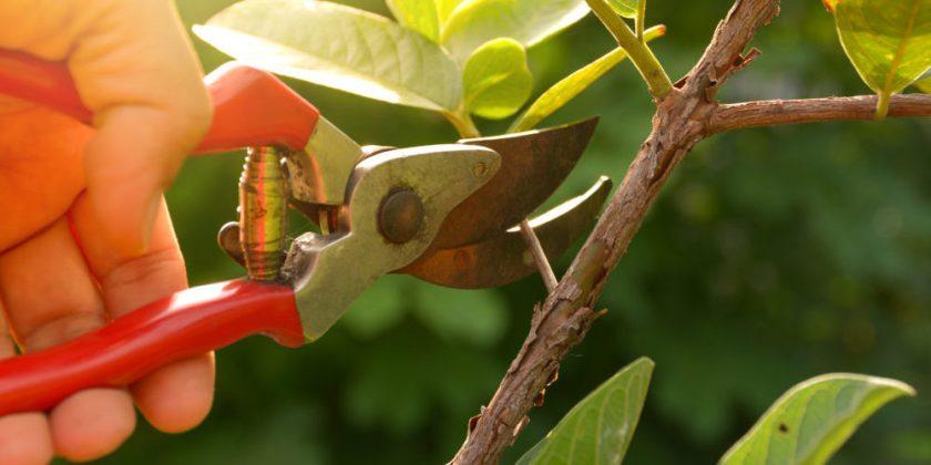 Pruning-e1504000020504.jpg